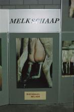 De vereniging Het Zeeuws Melkschaap